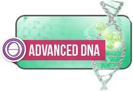 Theta Healing Seminar Aufbau DNA