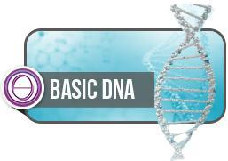 Theta Healing Seminar Basis DNA